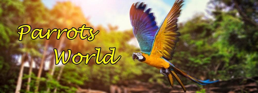 ParrotsWorld.ru