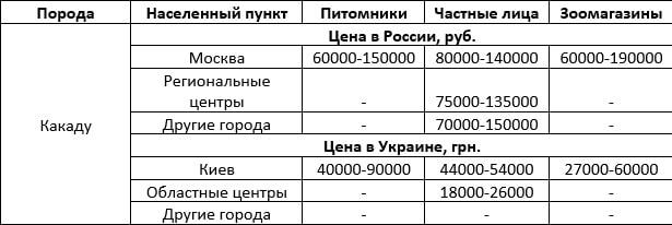 Стоимость какаду