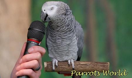 Жако говорит в микрофон