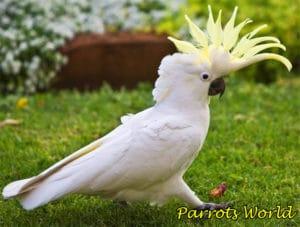 Топ-11 самых больших попугаев