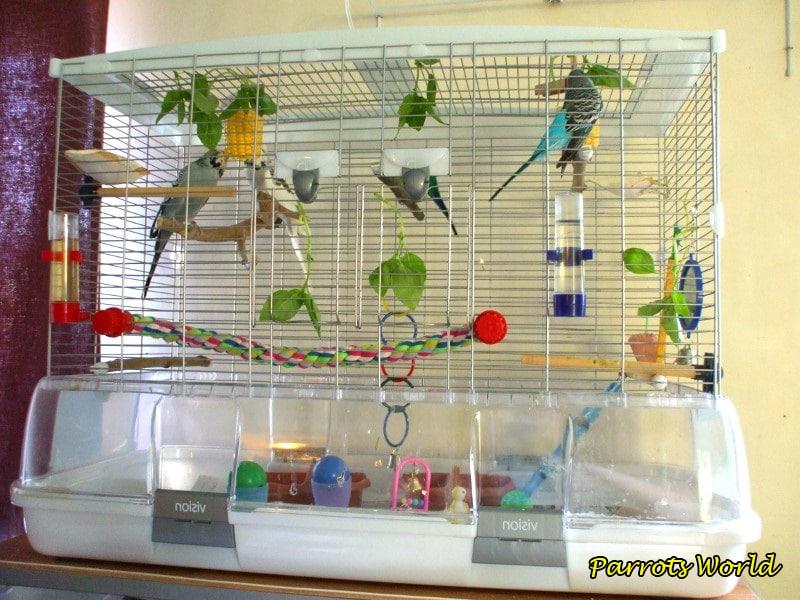 Клетка для волнистого попугая: размеры, форма, расположение