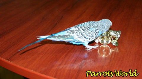 Игрушки для попугаев: всё о разновидностях и требованиях к игрушкам