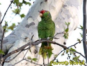 Где живут попугаи: ареал обитания популярных видов попугаев