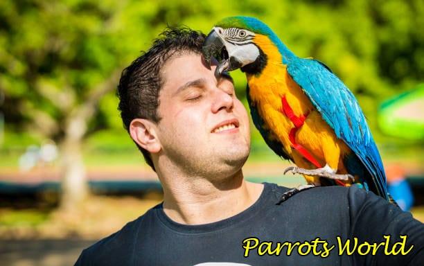 Сколько живет попугай ара в дикой природе и в домашних условиях