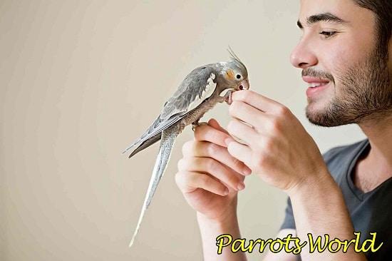 Попугай кусается