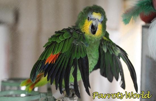 Напуганный попугай