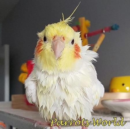 Попугай купался