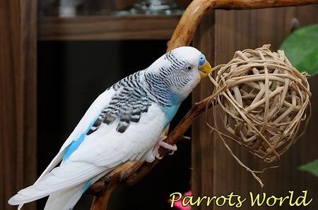 Плетёный шарик для маленьких попугаев